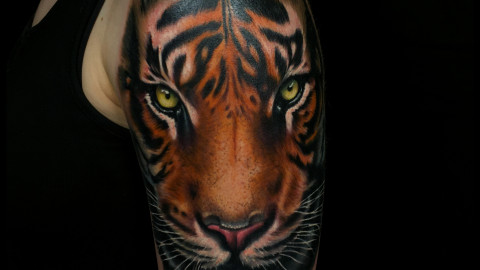 tiger on arm anansi